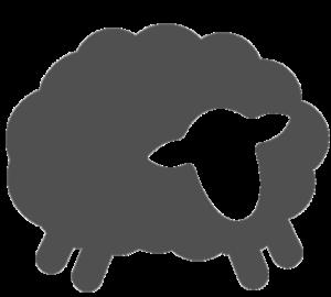 grey uno the sheep